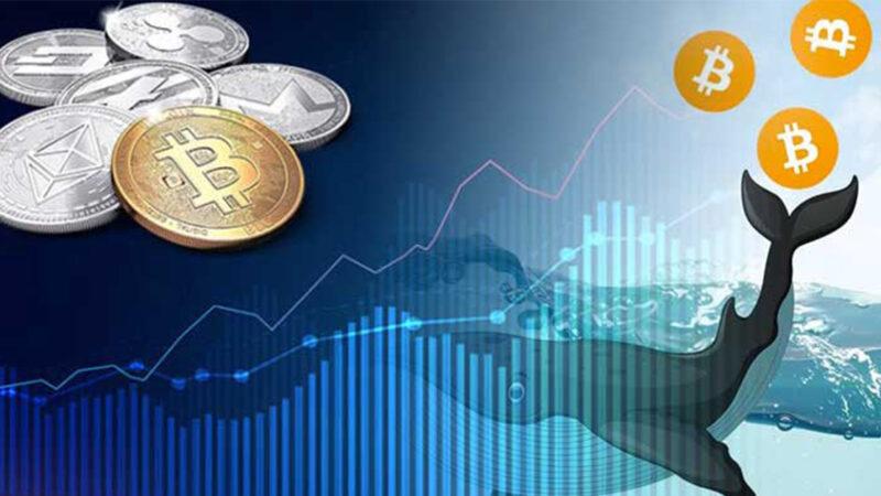 Bitcoin Whale dari 2010 bergerak 100 BTC untuk pertama kalinya dalam 11 tahun